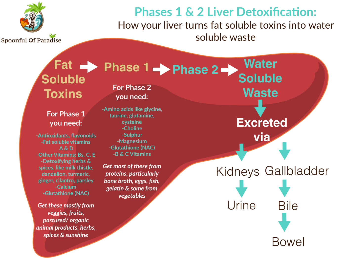 Cleansing part 2 its time to come clean inspire your cells to phases 1 2 liver detoxification ccuart Choice Image