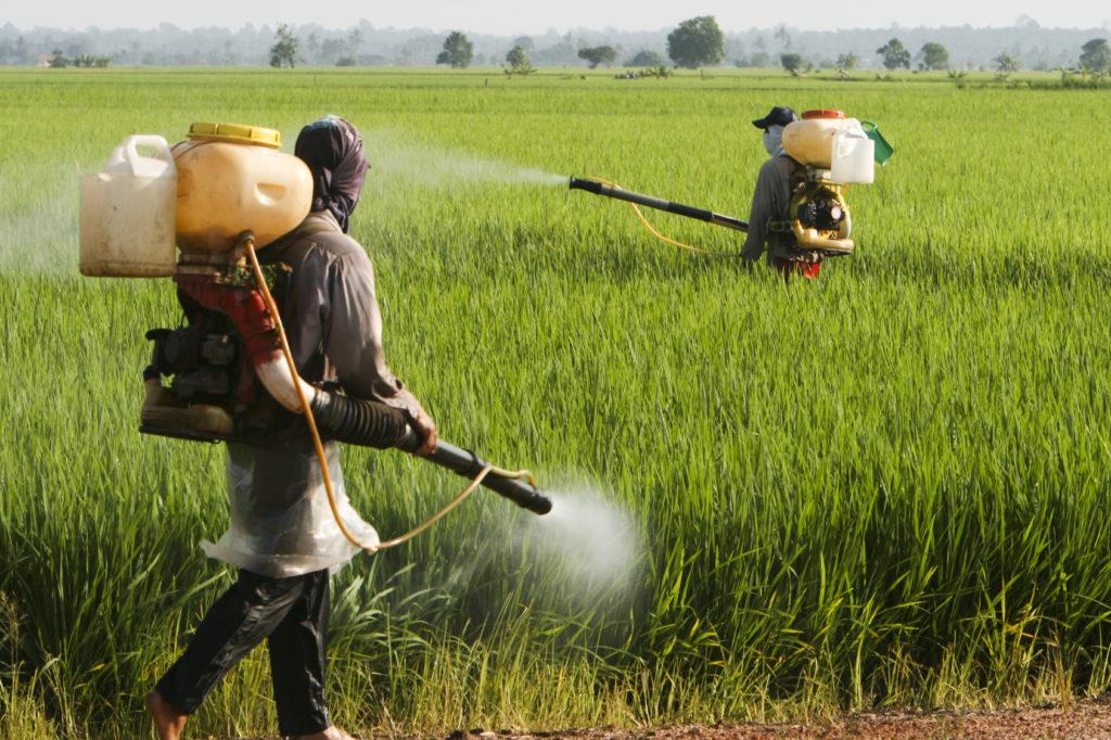 farmers working at paddy field in Sekinchan, Malaysia.